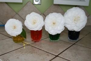 Simple color mixing and plant transpiration activity - ScienceBob.com