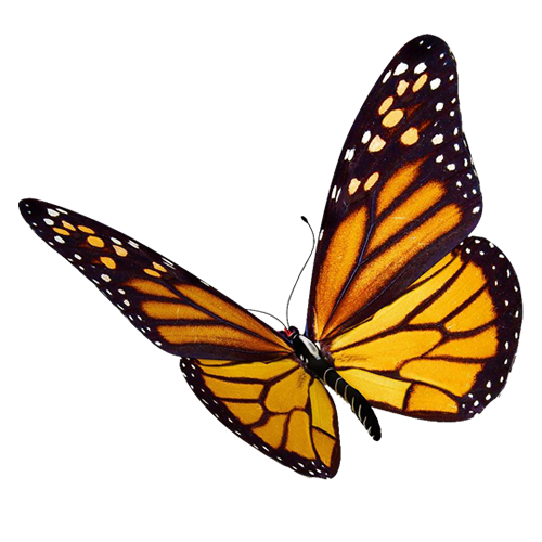 What is the difference between a moth and a butterfly ... - photo#25
