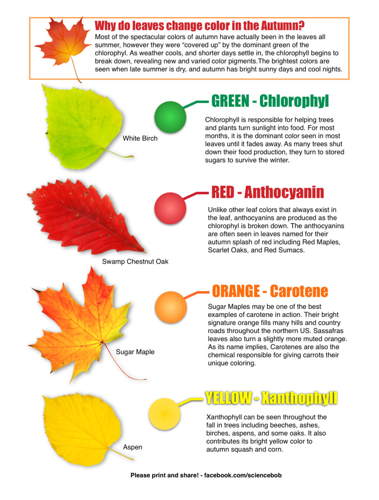 Why Do Leaves Change Color In The Fall on Kindergarten Worksheets Color Yellow