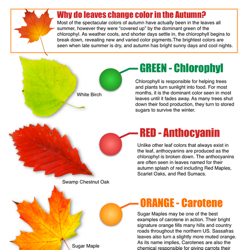 Autumn_Leaves.jpg (JPEG Image, 1223×1611 pixels) - Scaled (58%)