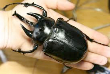 What is the largest insect in the world? - ScienceBob.com