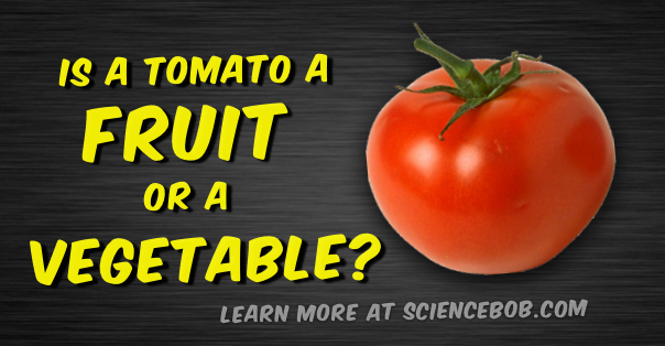 tomato is a fruit fruit sugar